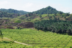 zones of future palm planting, young palm, and mature palm