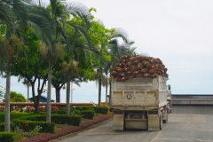 oil palm on route to mill