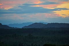 overlooking oil palm