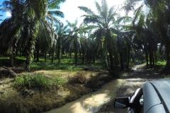 a bumpy ride through the plantation